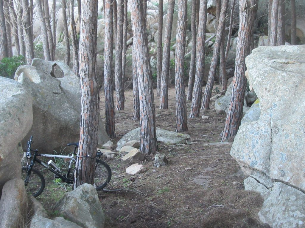 bivouac en forêt