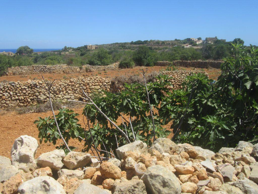 campagne de Gozo