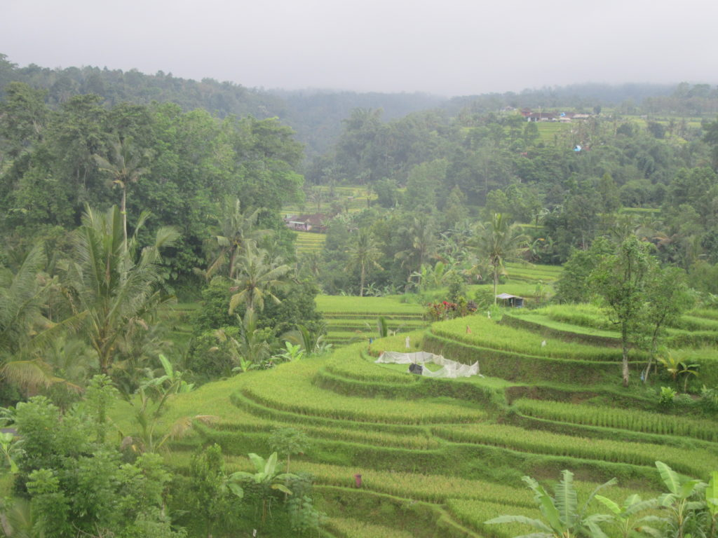 Les rizières de Jatiluwih classées à l'UNESCO