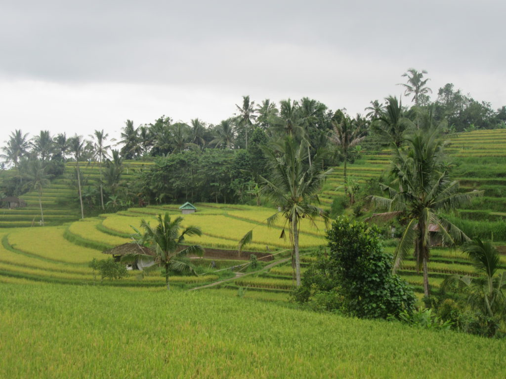 Rizières de Jatiluwih Bali UNESCO