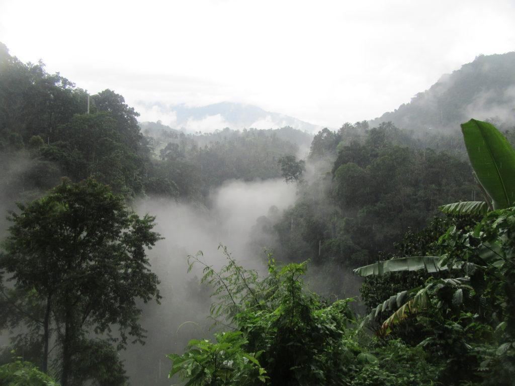 Jungle Bali