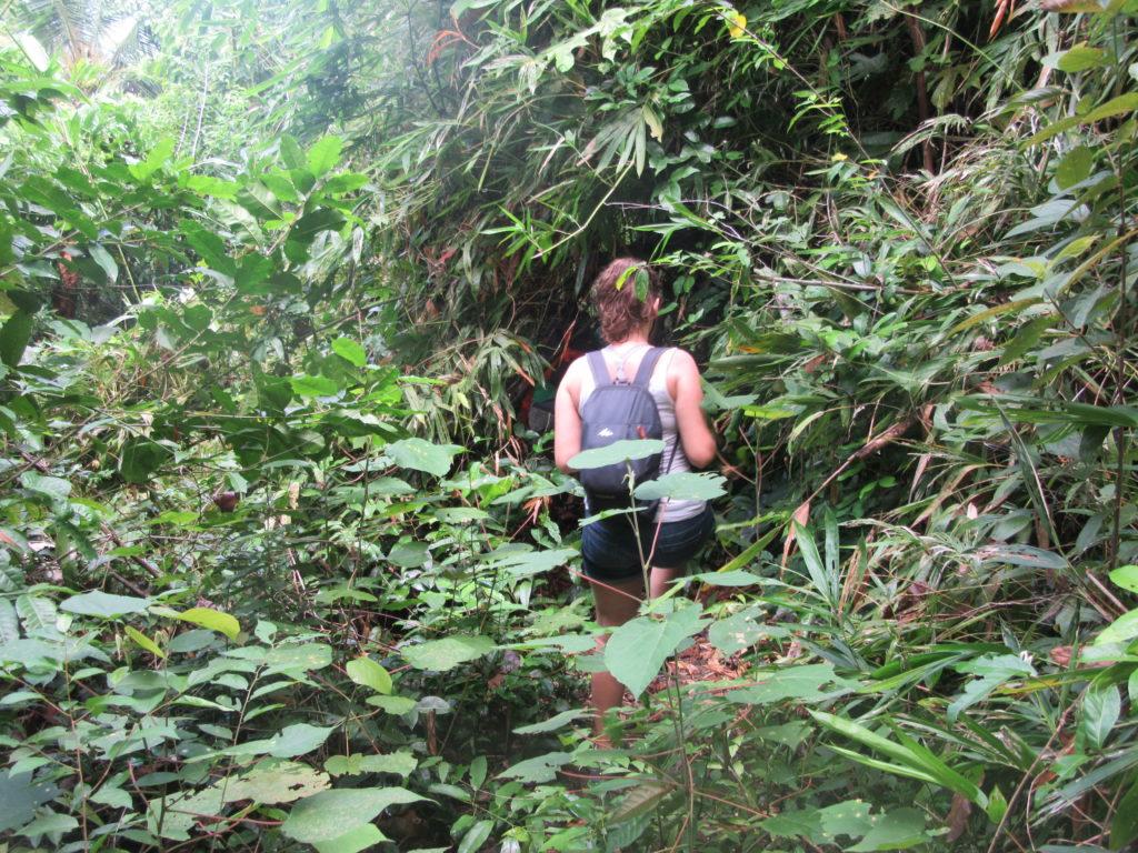 Jungle Togian Malenge