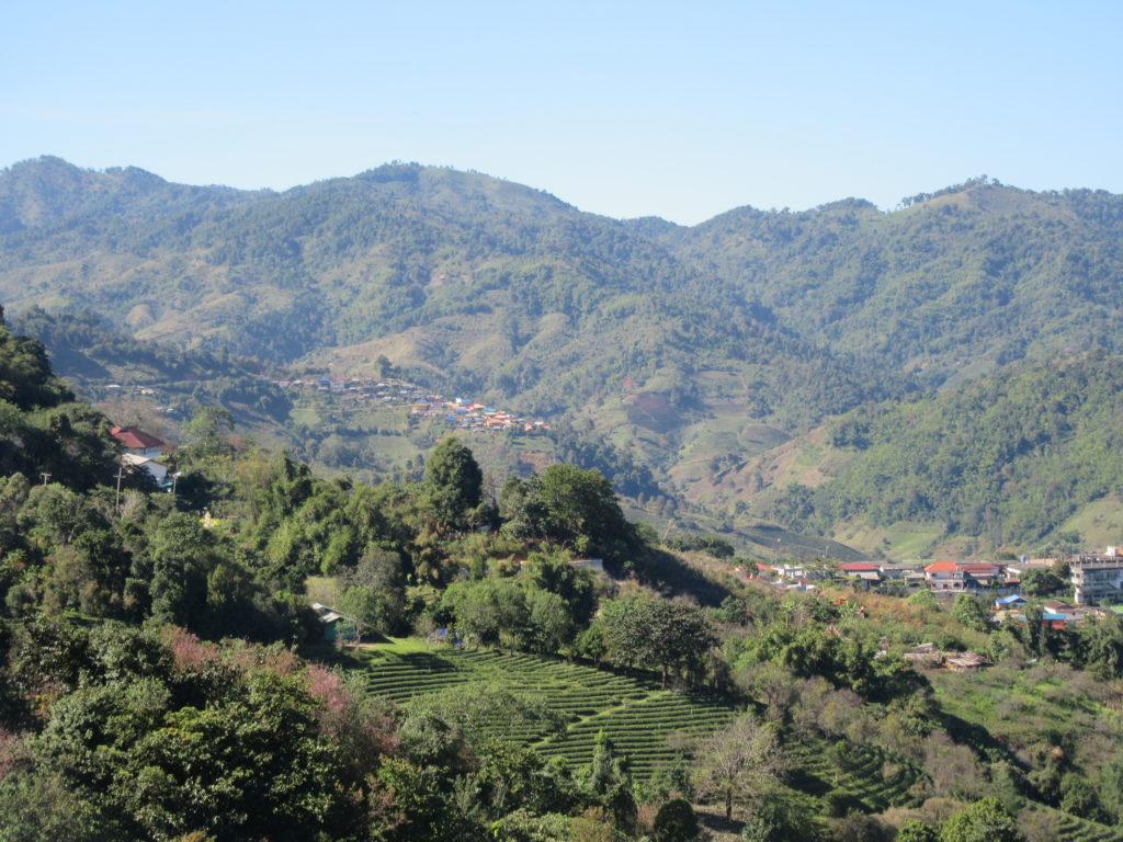 Montagnes Doi Mae Salong