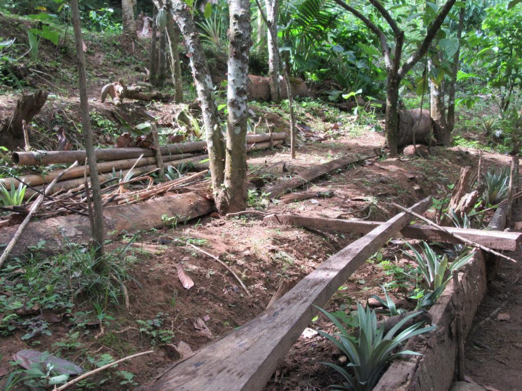 Wwoofing Sulawesi Tana Toraja
