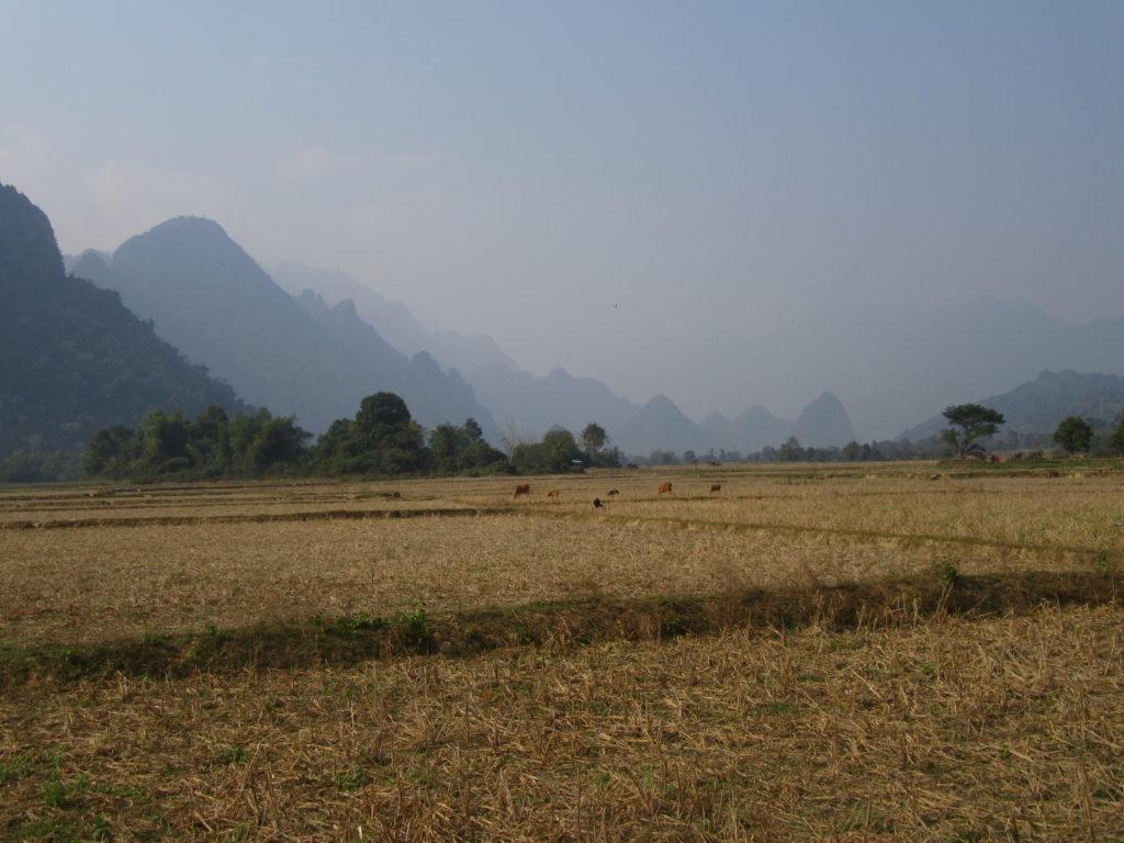 Vang Vieng paysages rizières Laos