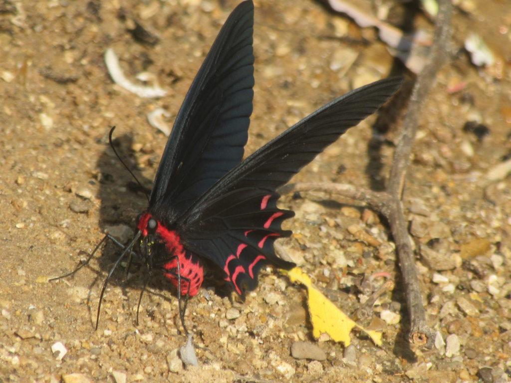 La Papillon, grotte de Konglor au laos