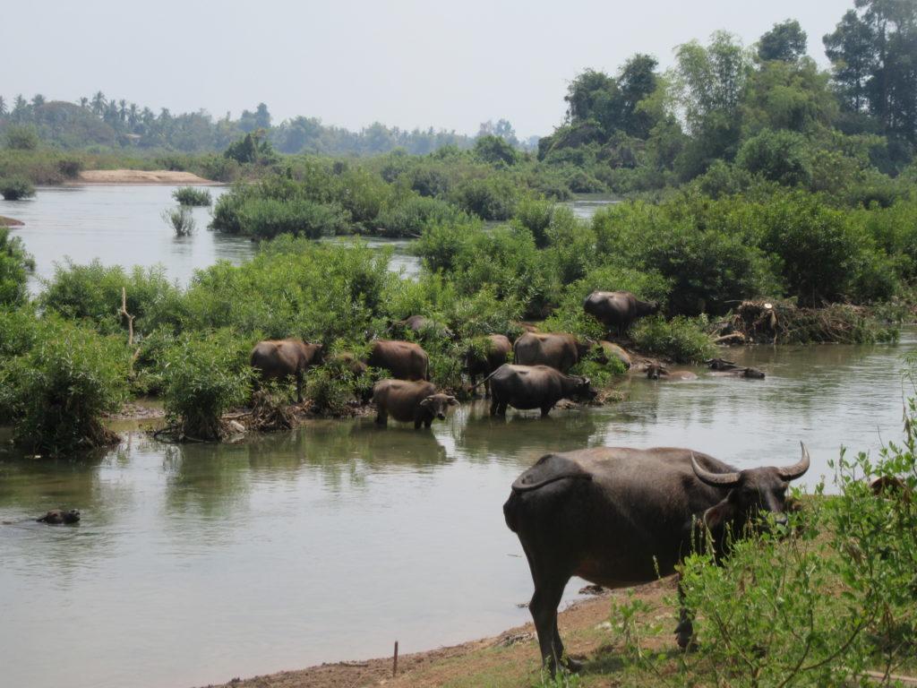 Les 4000 iles au Laos