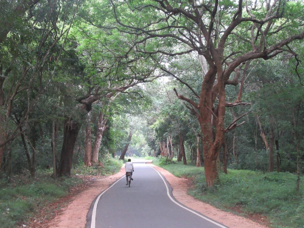 Nature et végétation près de Sigiriya