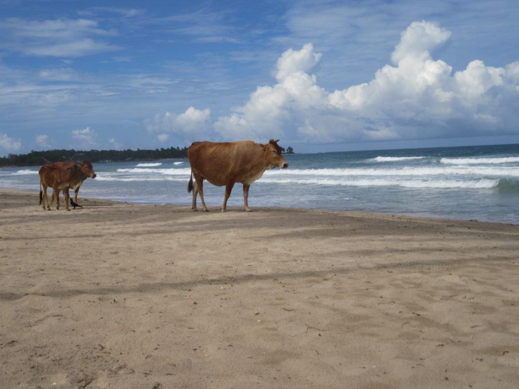 La côte est du Sri Lanka à Uppuveli