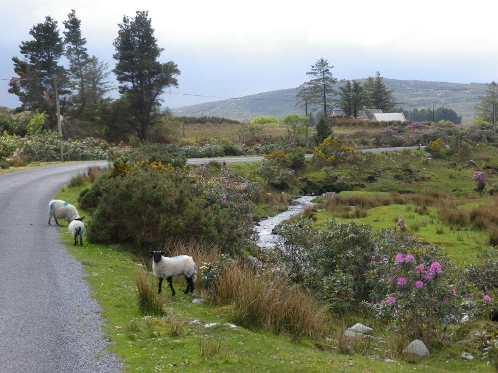 Voyage vélo Connemara en Irlande