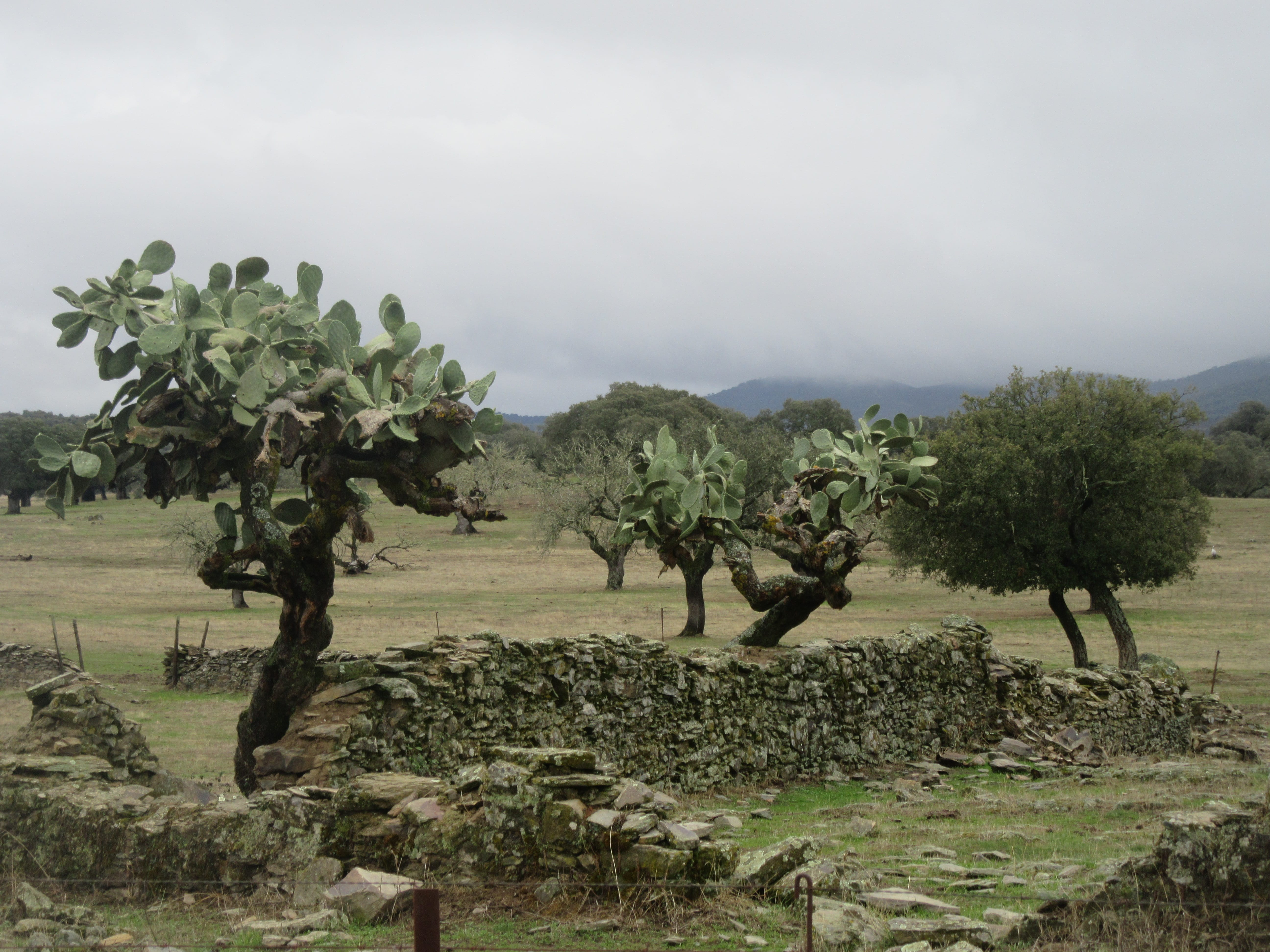 cactus espagne sierra de san pedro