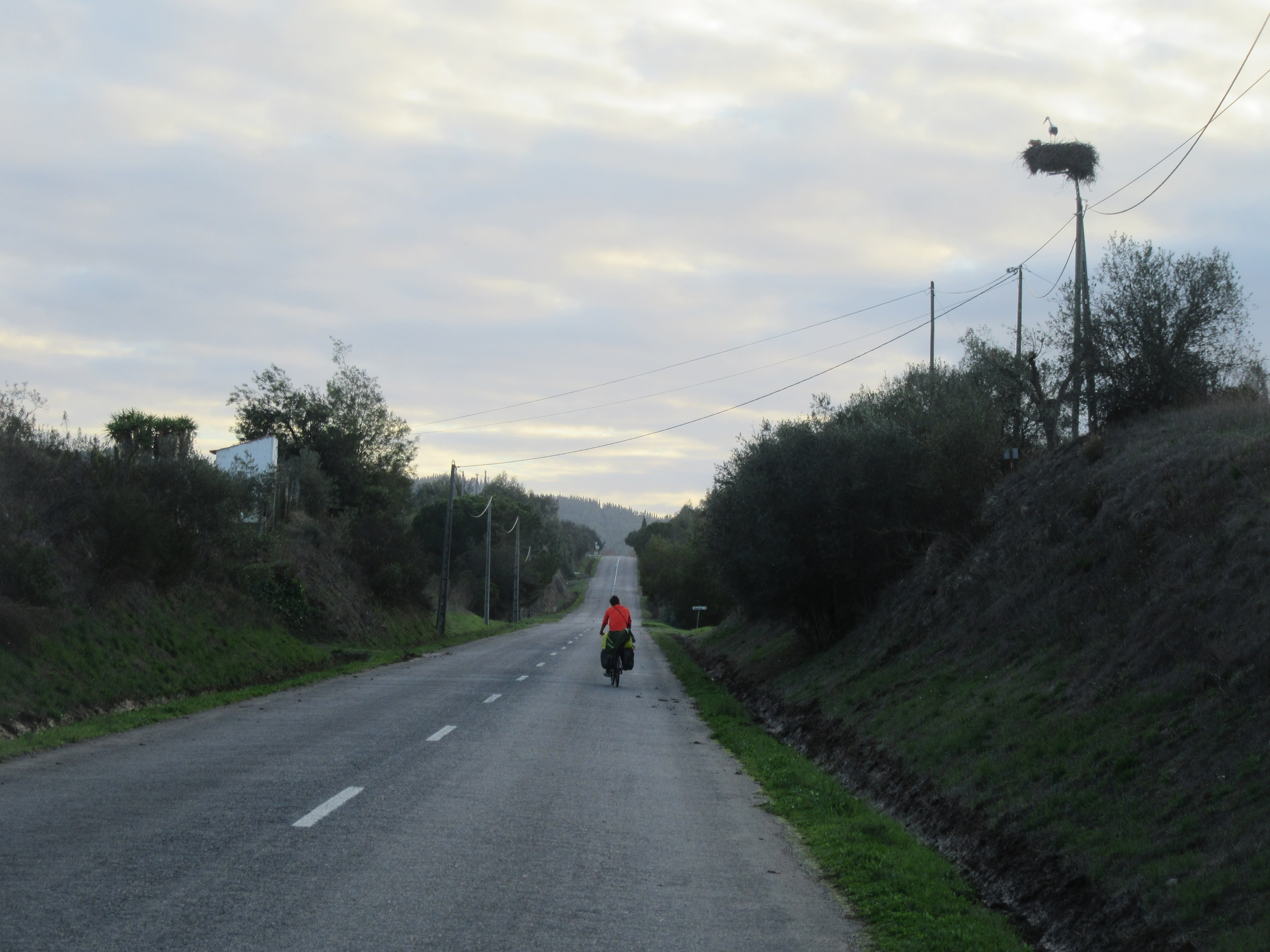 une cygogne au Portugal