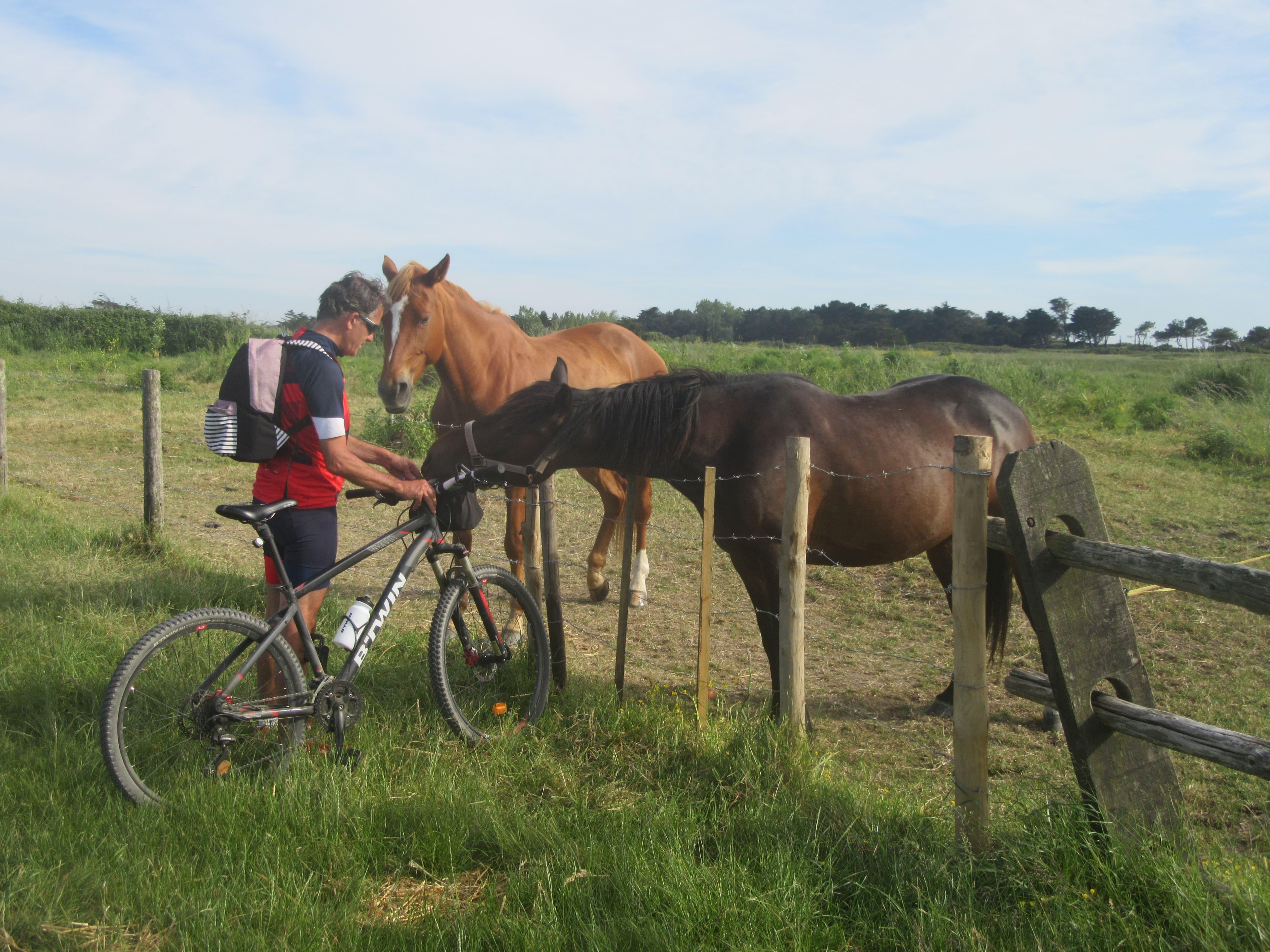 chevaux aux moutiers en retz sur la Vélodyssée