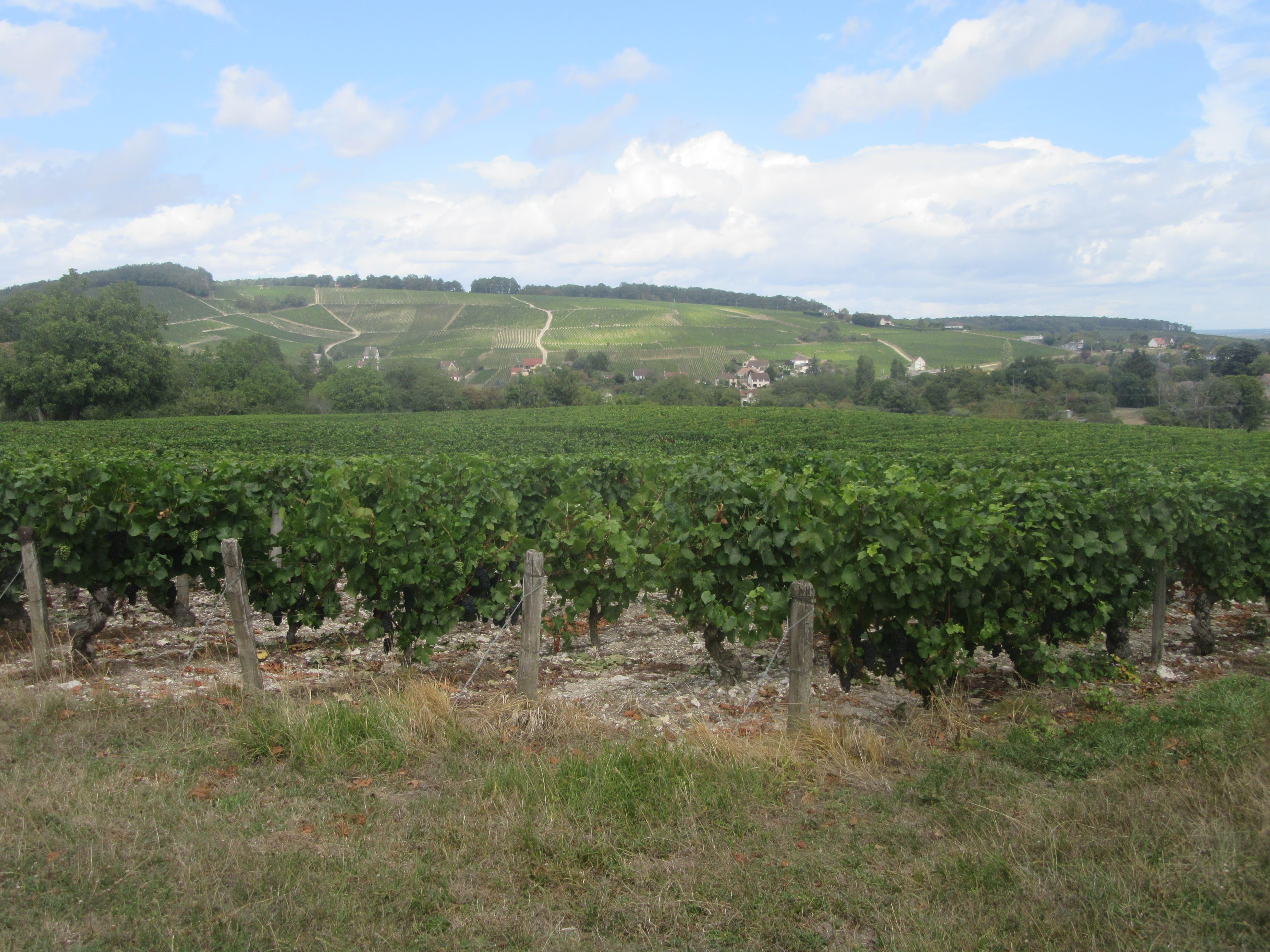le vignoble de Sancerre sur la Loire à Vélo