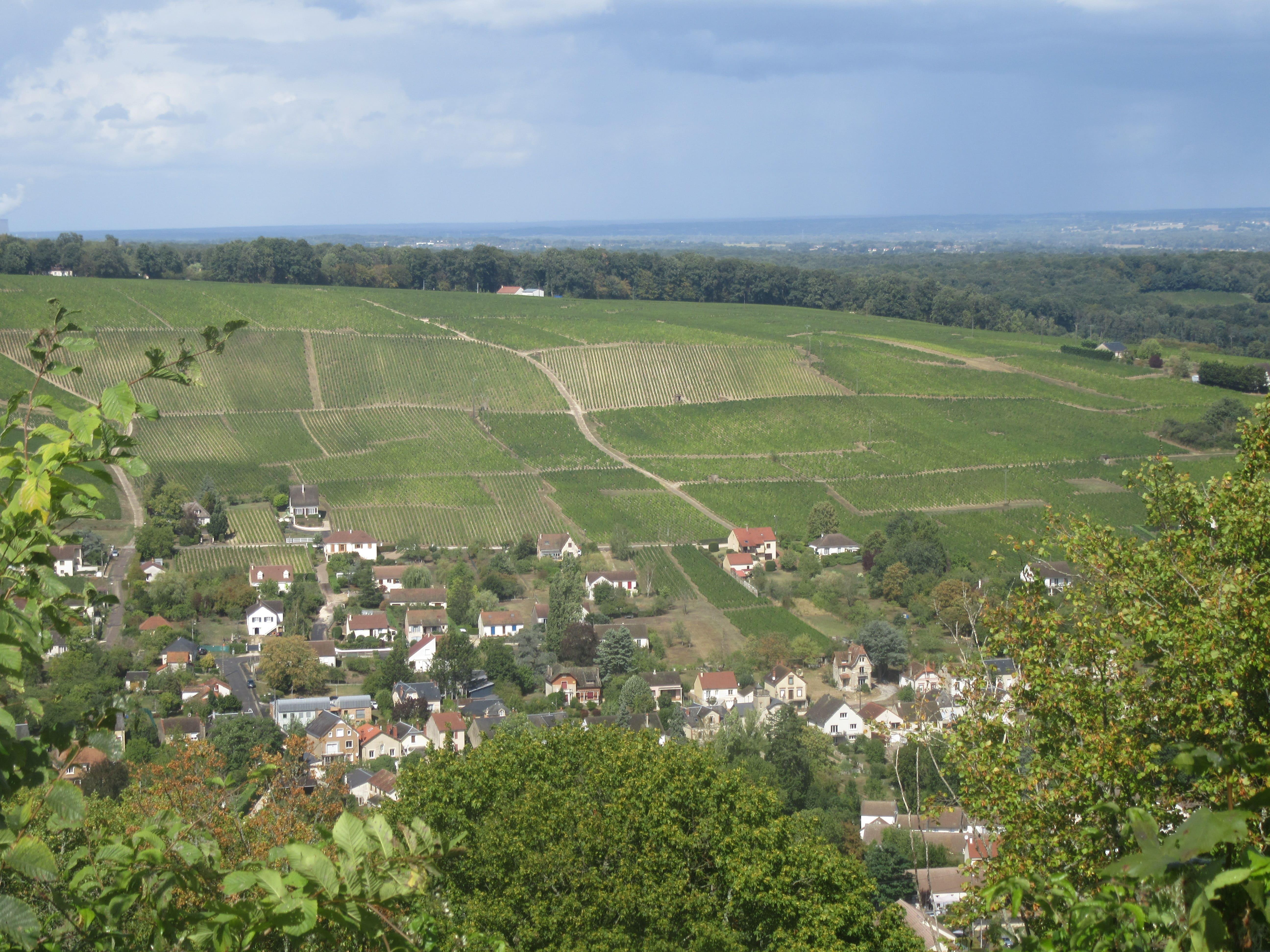 Panorama sur les vignes depuis Sancerre