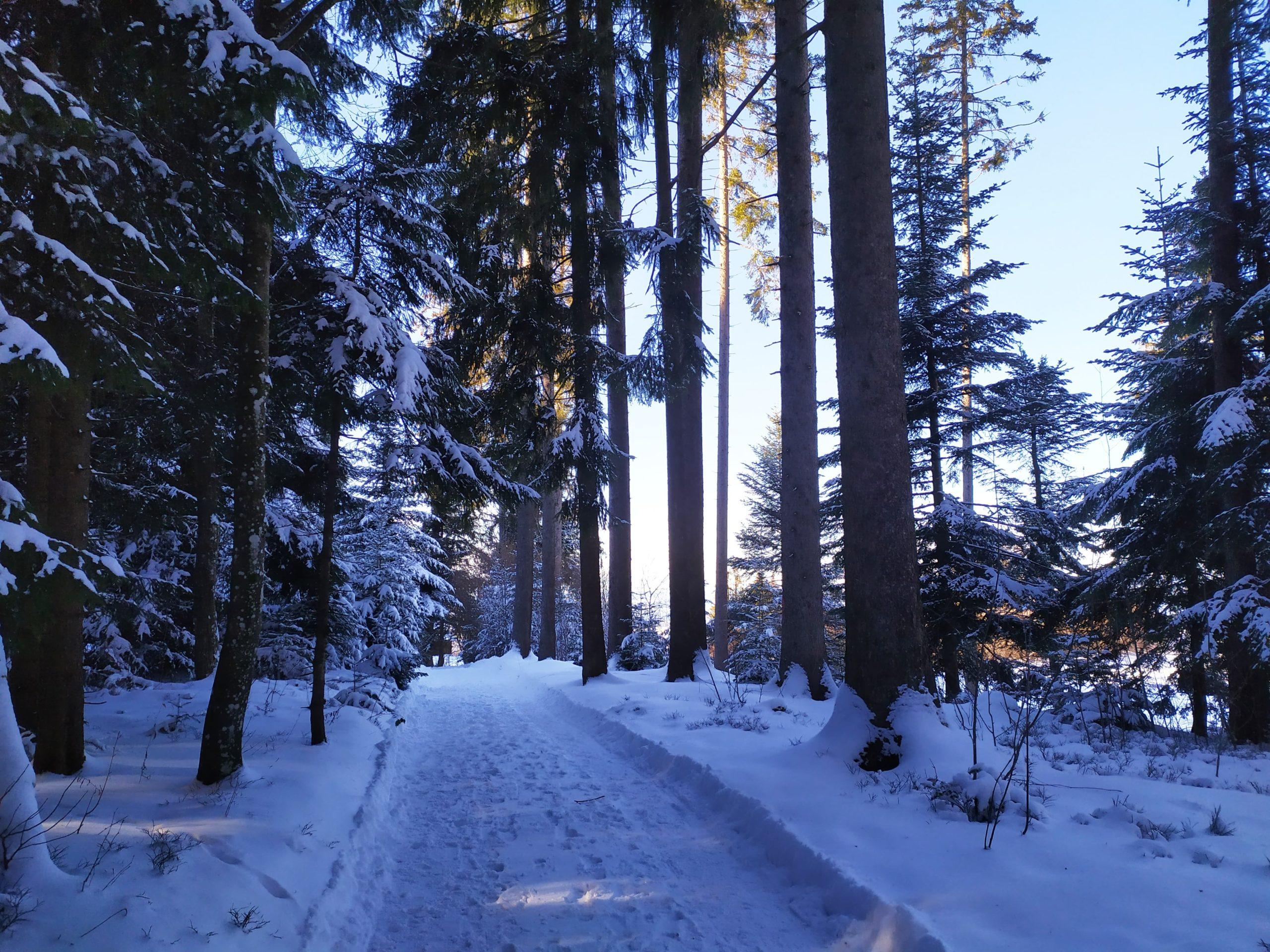 Randonnée en hiver dans le parc naturel du Gantrisch
