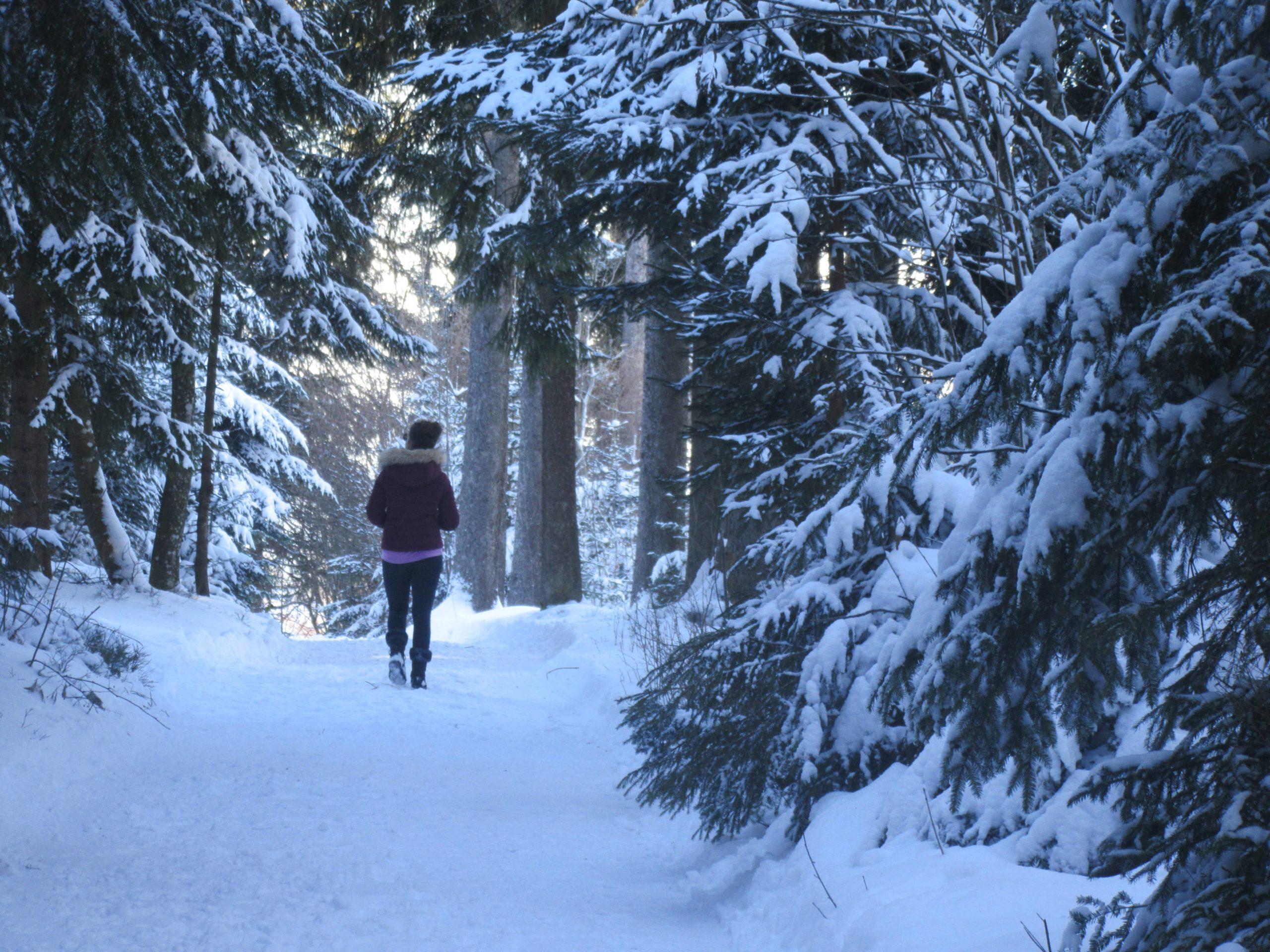 randonnée dans le parc naturel du Gantrisch près de Berne